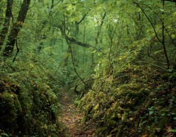 Jonathan Olley - The Forbidden Forest series (Front-Line Trench. German)