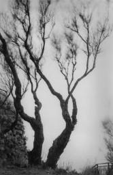 Alexandra Catiere - Tree (2014)